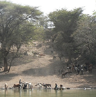 Zebu Project, Andasibe